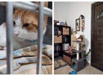 Χανιά: Βρήκε σπίτι η γατούλα με το θλιμμένο βλέμμα που ζούσε 3 χρόνια σε κλουβί κτηνιατρείου