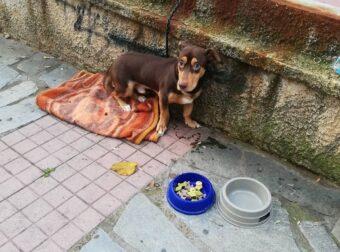 Εγκατέλειψαν σκυλάκι δεμένο στην Ελληνορώσων- Το ανέλαβε ο Δήμος Αθηναίων που έμαθε ποιος το παράτησε