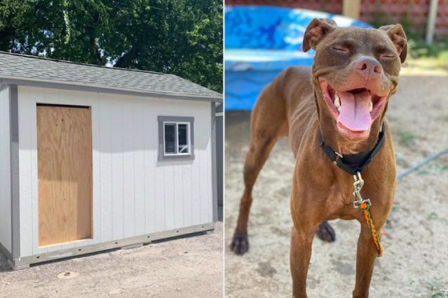 Καταφύγιο φτιάχνει σπιτάκια για τους σκύλους για να συνηθίσουν σε σπίτι πριν υιοθετηθούν